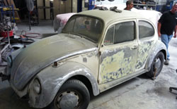 Old & Damage Beetle